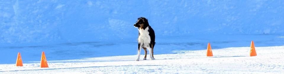 Välkommen till Piteå Brukshundklubb